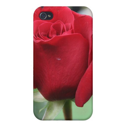 Red rose iPhone 4 covers