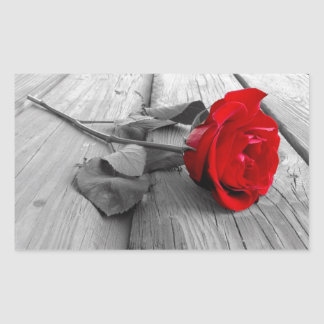 Red Rose Left On The Dock; I Still Love You