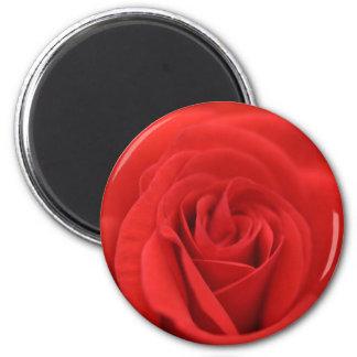 Red Rose Macro Magnet