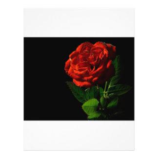 red-rose-macro-still-image-studio-photo flyer