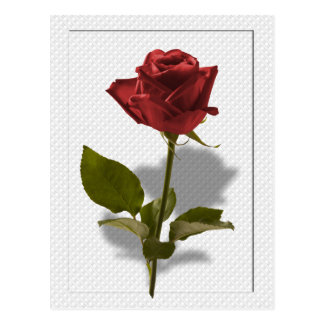 Red Rose of Love Portrait Postcard
