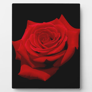 Red Rose on Black Background Plaque