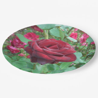 Red Rose Paper Plates for your next garden party 9 Inch Paper Plate