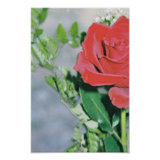 Red Rose Posters