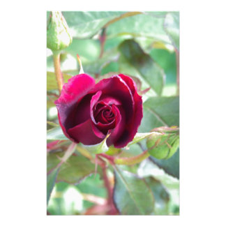 Red Rose Stationery Paper