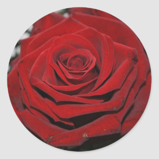 Red rose - Sticker