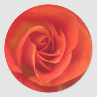 Red rose swirl classic round sticker