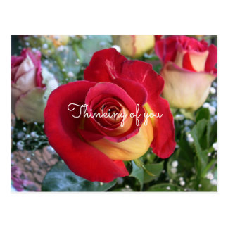 Red Rose Thinking of You Custom Message Postcard