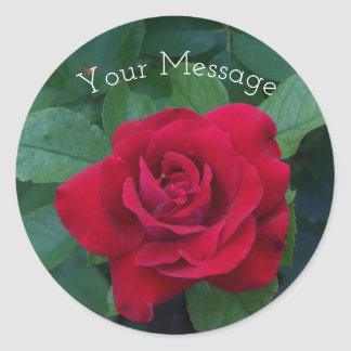 Red Rose Up Close Classic Round Sticker