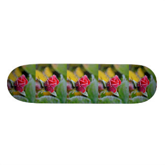 red rose with hoarfrost, close-up, extrudes, skateboard decks