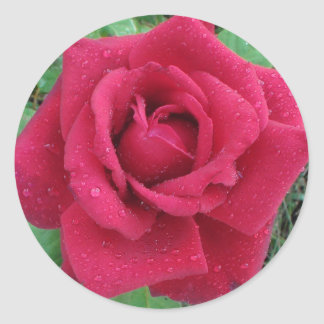 Red Rose with Raindrops on Petals Stickers