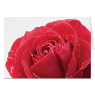 Red Rose with Water Droplets Card
