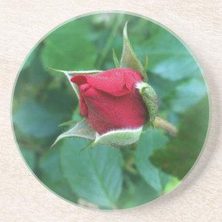 red rosebud coaster