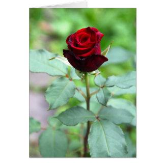 Red Rosebud Note Card