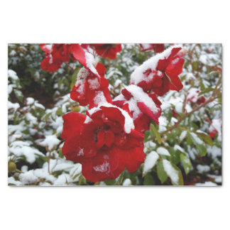 Red roses covered by snow and rime tissue paper