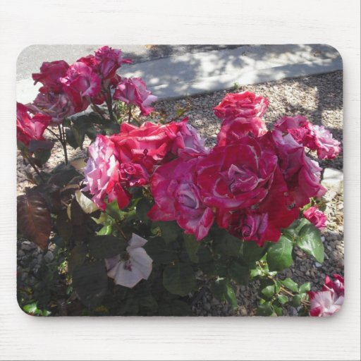Red Roses Trimmed in White Mousepads