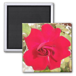 Red Rosy Magnet