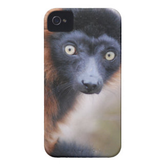 Red Ruffed Lemur Blackberry Bold Case-Mate Case