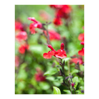 Red Salvia Personalized Letterhead