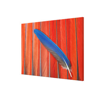 Red Scarlet Macaw Feather Still Life Canvas Print