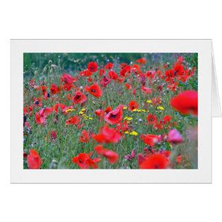 Red Scottish Poppies Card