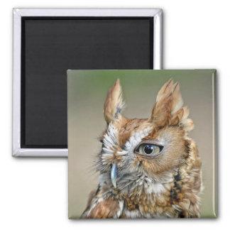 Red Screech Owl Magnet