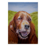 Red Setter - The Dignity of Age Poster