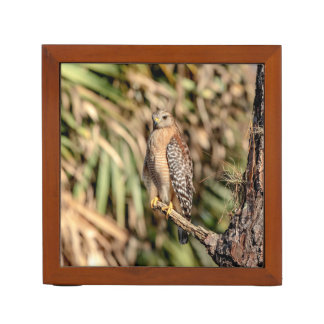 Red Shouldered Hawk in a tree Desk Organizer