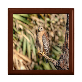 Red Shouldered Hawk in a tree Gift Box