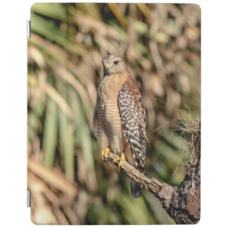 Red Shouldered Hawk in a tree iPad Cover