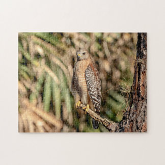 Red Shouldered Hawk in a tree Jigsaw Puzzle