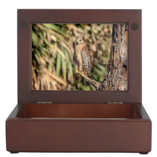 Red Shouldered Hawk in a tree Keepsake Box