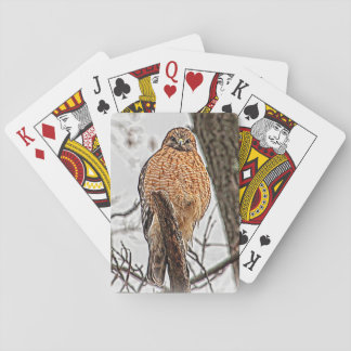 Red Shouldered Hawk in a tree Poker Deck