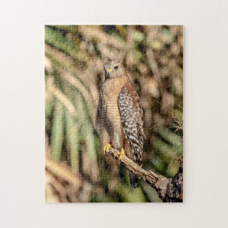 Red Shouldered Hawk in a tree Puzzles