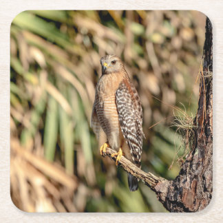 Red Shouldered Hawk in a tree Square Paper Coaster