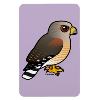 Red-shouldered Hawk Magnet