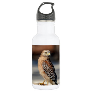 Red Shouldered Hawk on a rock 532 Ml Water Bottle