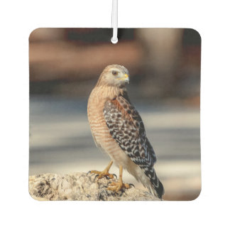 Red Shouldered Hawk on a rock Air Freshener