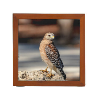Red Shouldered Hawk on a rock Desk Organizer