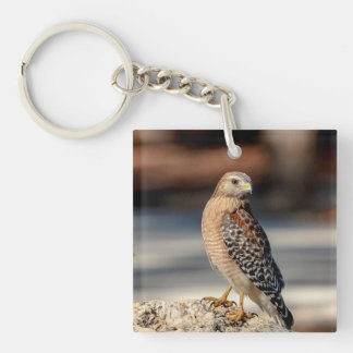 Red Shouldered Hawk on a rock Double-Sided Square Acrylic Keychain