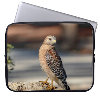 Red Shouldered Hawk on a rock Laptop Sleeve