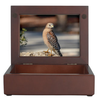 Red Shouldered Hawk on a rock Memory Box