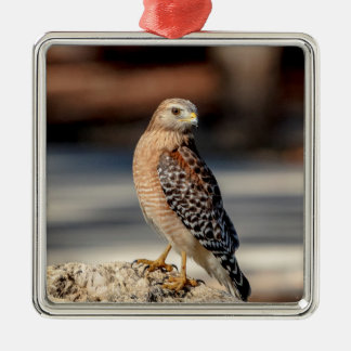 Red Shouldered Hawk on a rock Metal Ornament