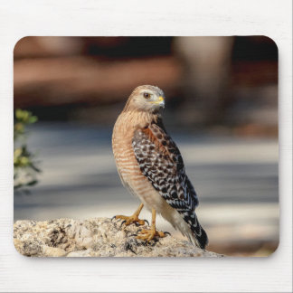 Red Shouldered Hawk on a rock Mouse Pad