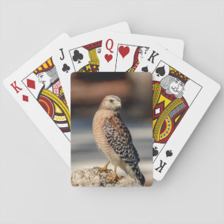 Red Shouldered Hawk on a rock Playing Cards
