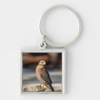 Red Shouldered Hawk on a rock Silver-Colored Square Keychain