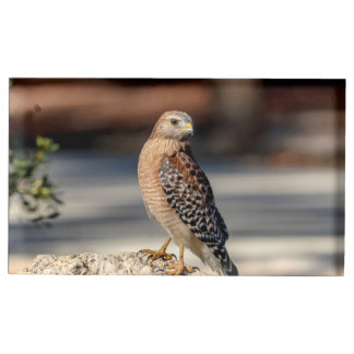 Red Shouldered Hawk on a rock Table Card Holder