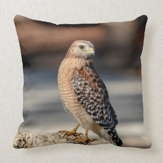 Red Shouldered Hawk on a rock Throw Pillow