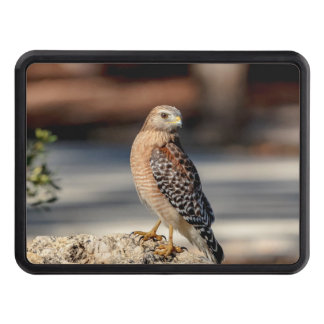 Red Shouldered Hawk on a rock Trailer Hitch Cover