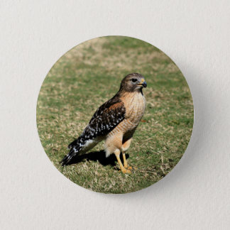 Red Shouldered Hawk on Golf Course 2 Inch Round Button